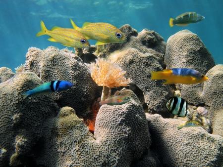 martinique: Coral duro cerca de la superficie del agua con peces de colores y un gusano de tubo, el mar del Caribe
