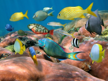 bahamas: Colorful shoal of fish over massive coral reef, Caribbean sea Stock Photo