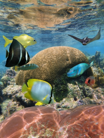 Underwater coral reef with colorful tropical fish and an eagle ray photo