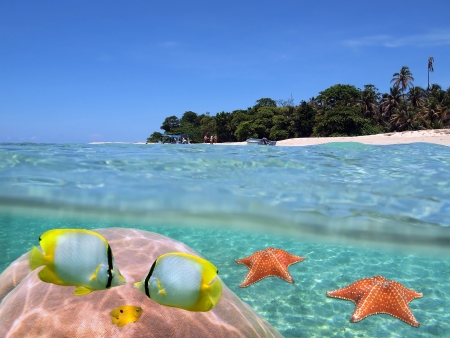 cushion sea star: Above and underwater view on a tropical beach in the Caribbean sea Stock Photo
