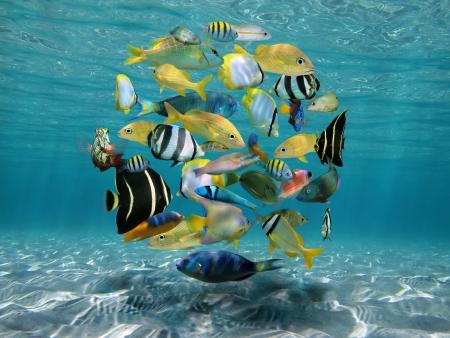 Banc de poissons formant un cercle au-dessus d'un fond de sable dans l'eau claire et peu profonde Banque d'images