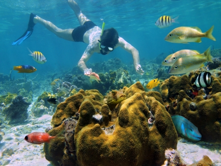 Snorkeler looking a starfish in a coral reef with colorful tropical fish around him
