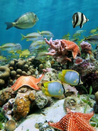 Sous-marine des récifs coralliens avec des étoiles de mer et de l'école de poissons multicolores juste en dessous de l'eau
