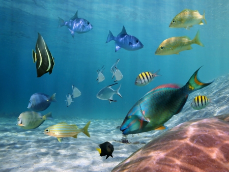 school of fish: Colorful school of fish with ripples of sunlight reflected on the ocean floor