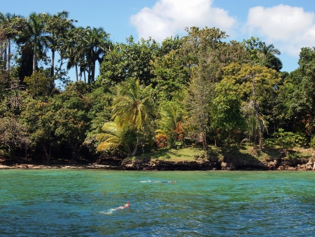 Snorkelers swimming near a beach with lush tropical vegetation photo