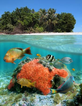 Sous la mer au-dessus de la terre près de la plage d'une île des Caraïbes