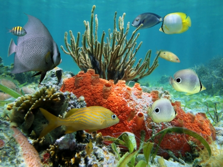 corales marinos: Colores bajo el agua de la vida en un arrecife de coral, el mar del Caribe