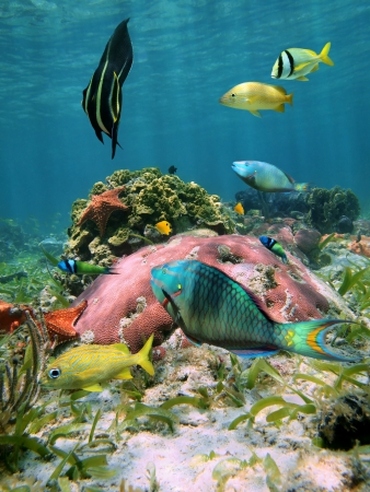Colorful fish,corals and starfish in the Caribbean sea photo