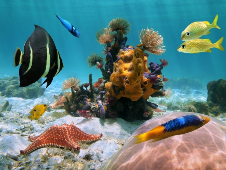 Fonds marins peu profonds sous les tropiques avec des vers, étoiles de mer, coraux multicolores, des éponges et poissons Banque d'images