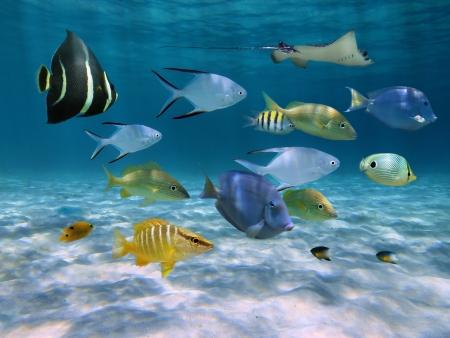 École de poisson avec des ondulations de lumière solaire réfléchie sur le fond de l'océan de sable en eau peu profonde