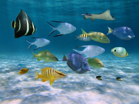 School of fish with ripples of sunlight reflected on the sandy ocean floor in shallow water