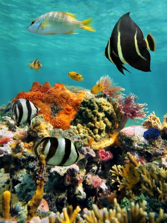 bottom: Colorful sea life in a coral reef with water surface in background, Caribbean sea, Mexico