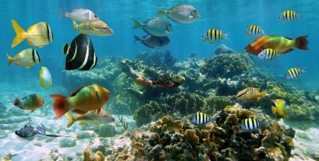 arrecife: Underwater panorama en un arrecife de coral poco profundo con la escuela de coloridos peces tropicales y de agua superficial en el fondo
