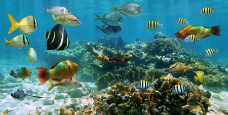 Underwater panorama in a shallow coral reef with school of colorful tropical fish and water surface in background
