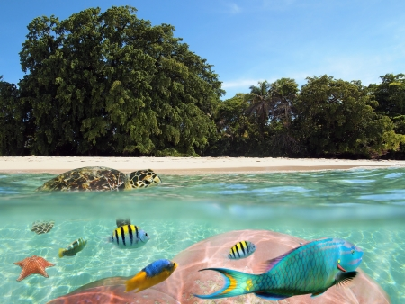 Tropical beach with a turtle on the water surface and colorful coral and fish below Stock Photo