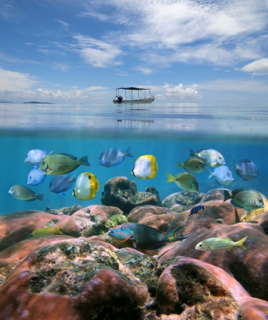 Boat alone above a coral reef with shoal of tropical fish just under the water surface, Caribbean sea photo