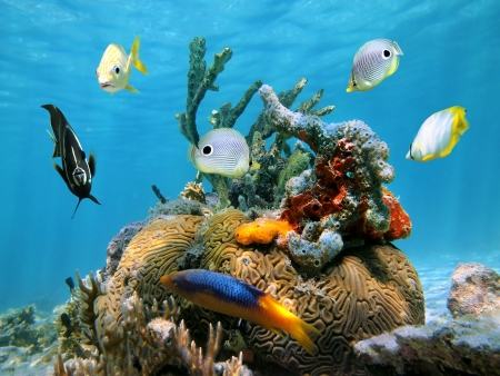 colorful water surface: Brain coral with colorful sea sponges and tropical fish in the Caribbean sea