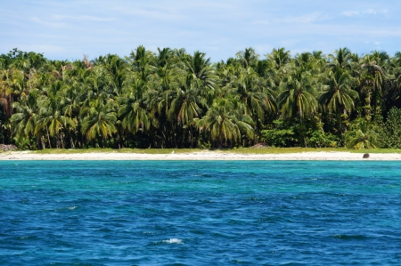 Beach with lush coconut trees in Zapatillas Keys, two islands located  in the Bocas del Toro archipelago, Caribbean sea, Panama Stock Photo - 16431800