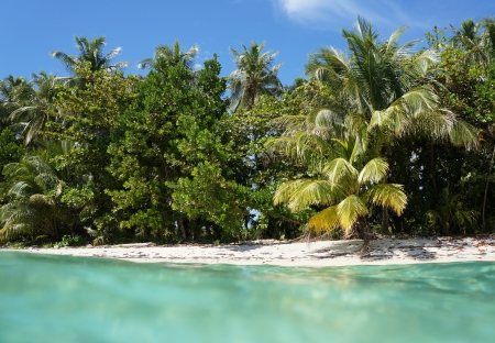 View from the water surface of a white sand beach with beautiful vegetation in the Zapatillas Keys islands, Bocas del Toro archipelago, Caribbean sea, Panama photo