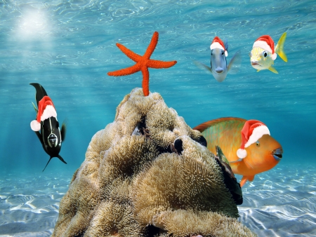 Underwater scene with  fish in red Santa Claus hat and a starfish on top of a pile of sea anemone