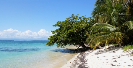 Panorama on a beach with calm sea and beautiful vegetation Stock Photo - 16615745