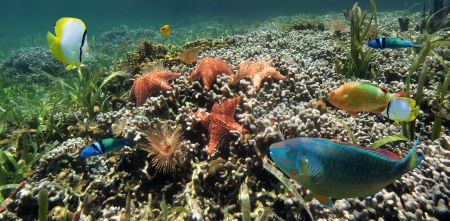 Underwater scenery panorama in a coral reef with starfish, feather duster worms and colorful tropical fish photo