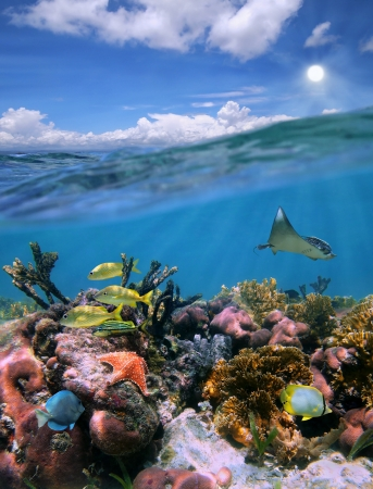 Mayan Riviera split view with sky and colorful underwater coral reef paradise photo