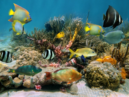 cozumel: Colonia colorido coral bajo el agua en un arrecife con hermoso cardumen de peces tropicales