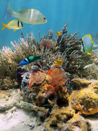 Colorful underwater scenery in a coral reef with tropical fish and Feather duster worms, Caribbean sea photo