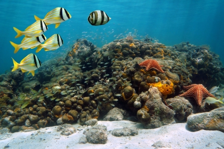 Underwater scene of a coral reef with abundant sea life photo