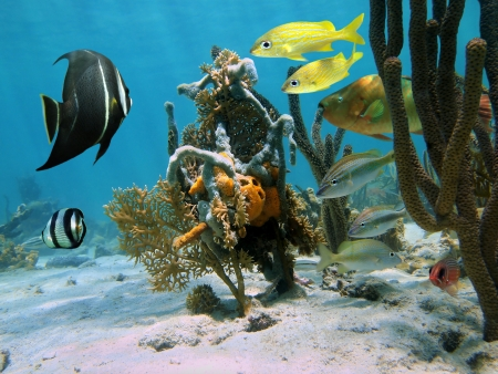 Strange forms of sea life in a coral reef with tropical fishes photo