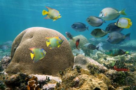 뇌 산호와 다채로운 물고기의 떼와 카리브 해에서 수 중 풍경