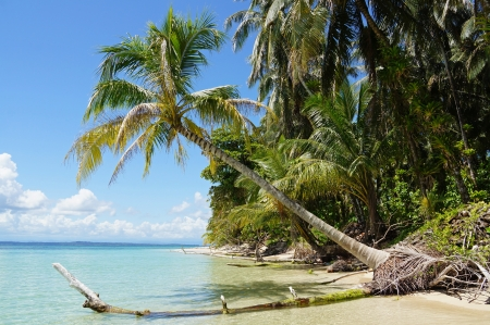 Tropical beach with a coconut tree over the sea photo