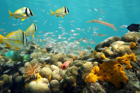 Shoal of fish above coral reef in shallow water photo