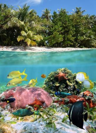 Diviser voir sous les tropiques avec une végétation de vie marine sous-marin coloré et abondante sur la plage