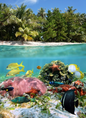 caribbean sea: Split view in the tropics with colorful sea life underwater and abundant vegetation on the beach