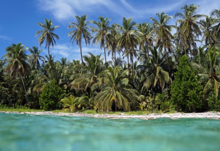 View from the water surface of a tropical beach with beautiful coconut palm trees photo