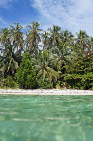 View from the surface of a tropical beach with beautiful coconut palm trees and turquoise waters photo