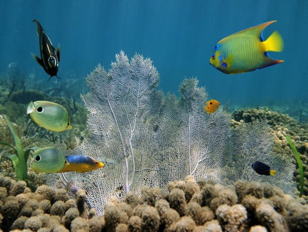 Sea fan in a coral reef with colorful tropical fish Stock Photo - 17955019