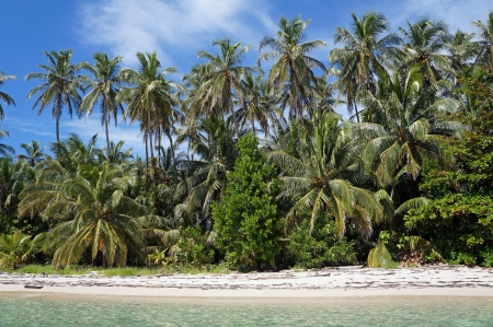 Tropical white sand beach with beautiful coconut palm trees, Caribbean sea photo