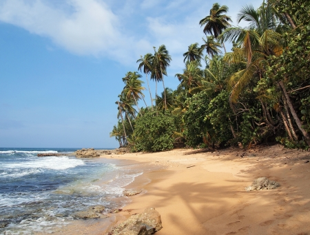 Unspoiled tropical beach with lush vegetation and a shade of a coconut tree on the sand photo