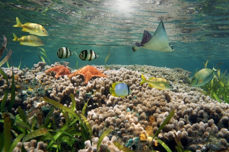 Vibrant underwater sea life in an shallow coral reef with tropical fish and an eagle ray Stock Photo