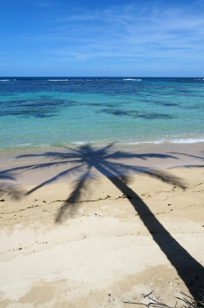 Coconut tree shade on a sandy beach with clear waters of a lagoon in background photo