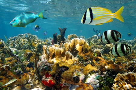 Underwater scenery in a colorful coral reef with tropical fishes and the water surface in background photo