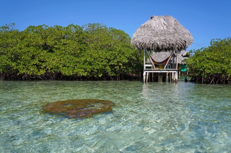 islets: Palapa over the sea between islets of mangrove, and hard coral just under water surface in foreground