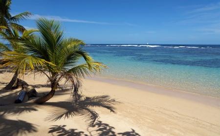 Un morceau de paradis sur une plage tropicale avec cocotiers et ses eaux transparentes de sa lagune, la mer des Caraïbes