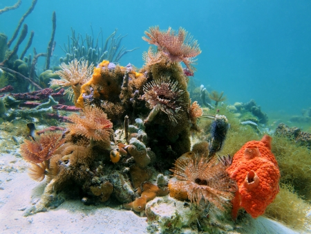 mujeres: Colorful marine life with feather duster worms and sea sponges in the Caribbean sea