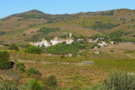vermilion coast: Mediterranean village of Cosprons in the midst of its vineyard fields, Roussillon, Vermilion coast, France Stock Photo