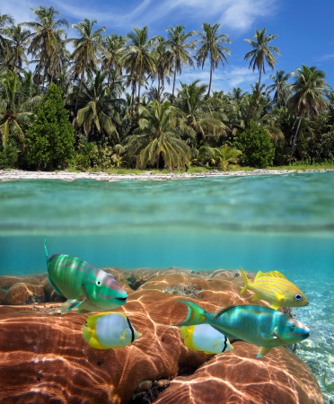Underwater and surface view with tropical beach, colorful coral reef and fish photo