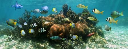 Underwater panorama dans un magnifique récif de corail avec l'école de poissons colorés